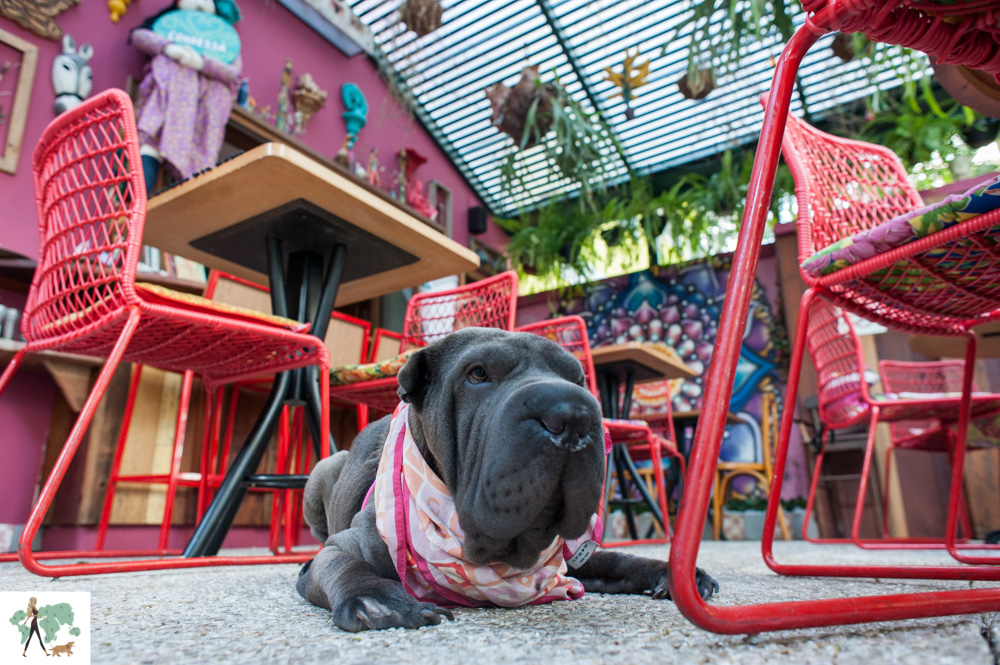 cachorro deitado no meio de restaurante colorido