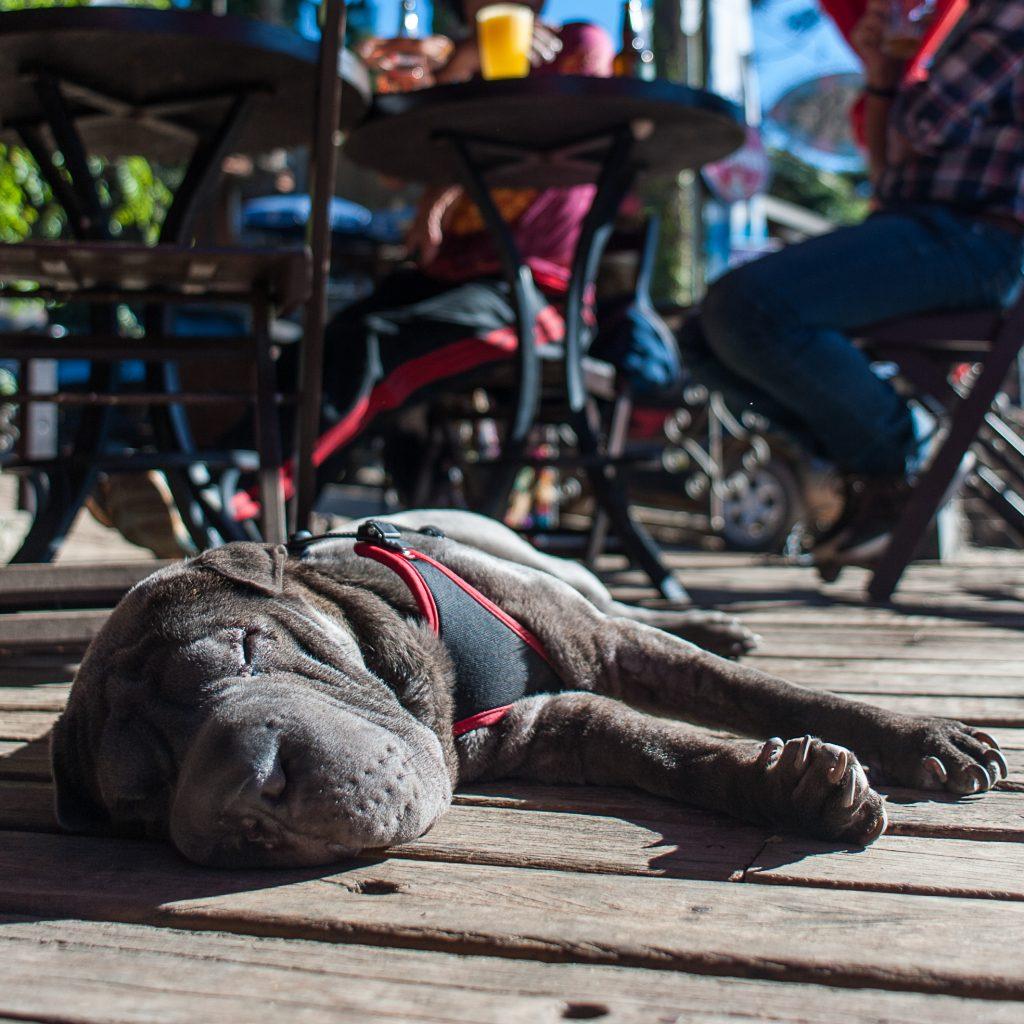cachorro deitado no chão ao lado de mesas