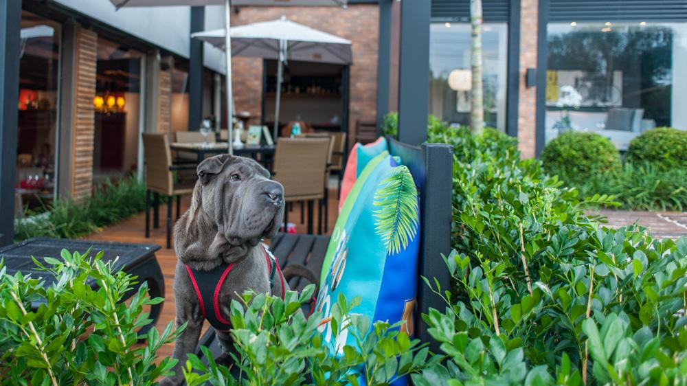 cachorro sentado em cima de banco de restaurante