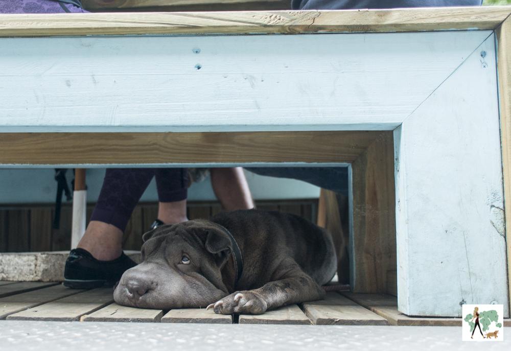 cachorro embaixo de banco