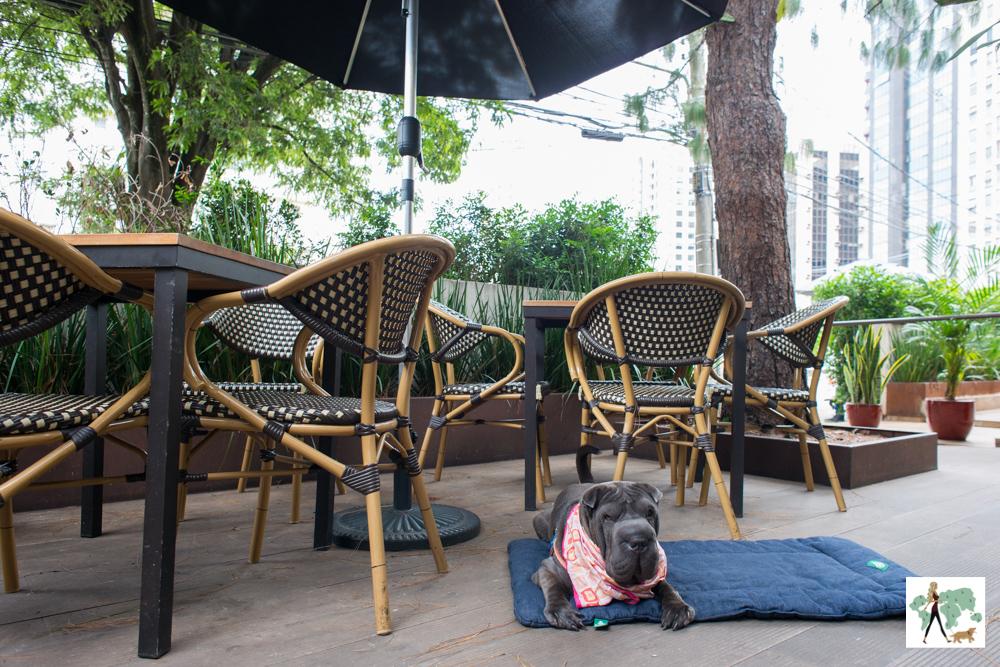 cachorro em terraço de restaurante