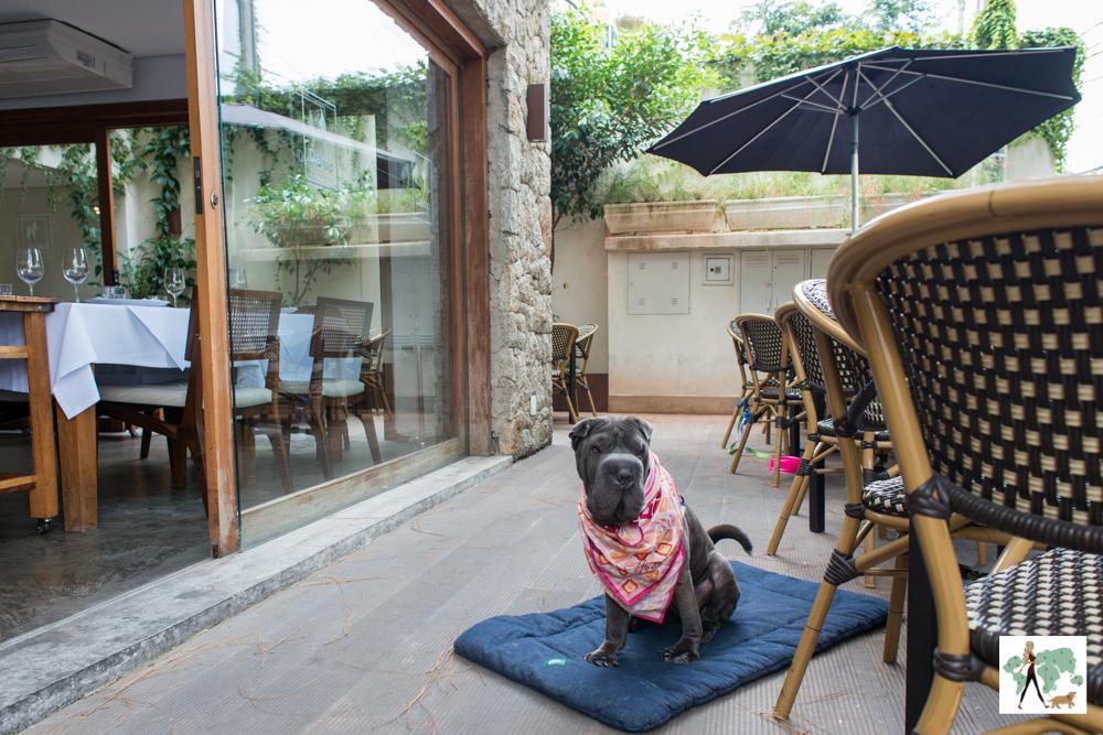 cachorro sentado em cima de almofada em restaurante
