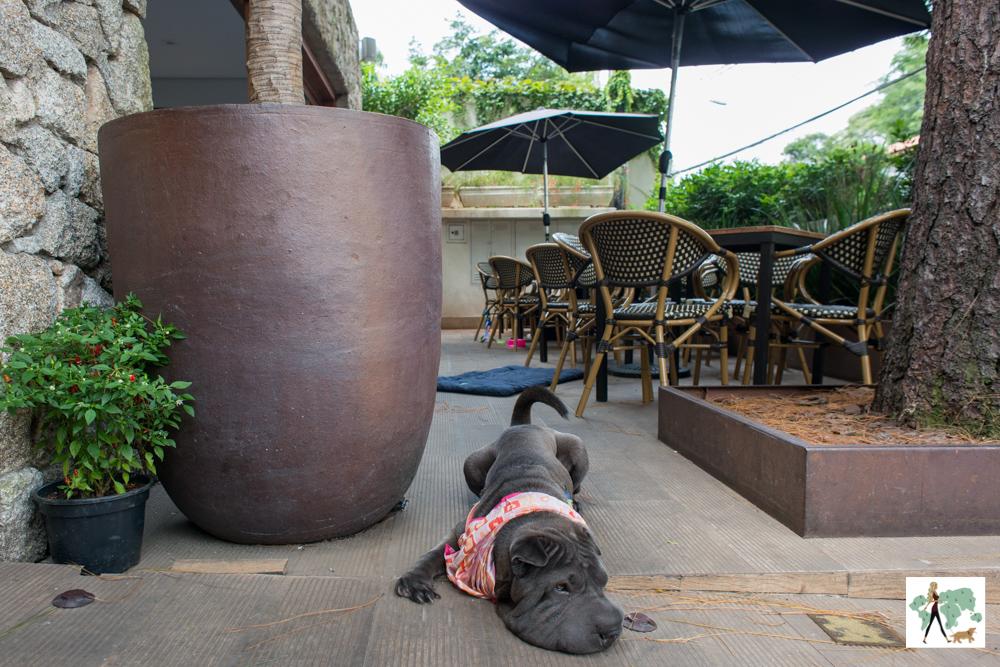 cachorro deitado na varanda de restaurante