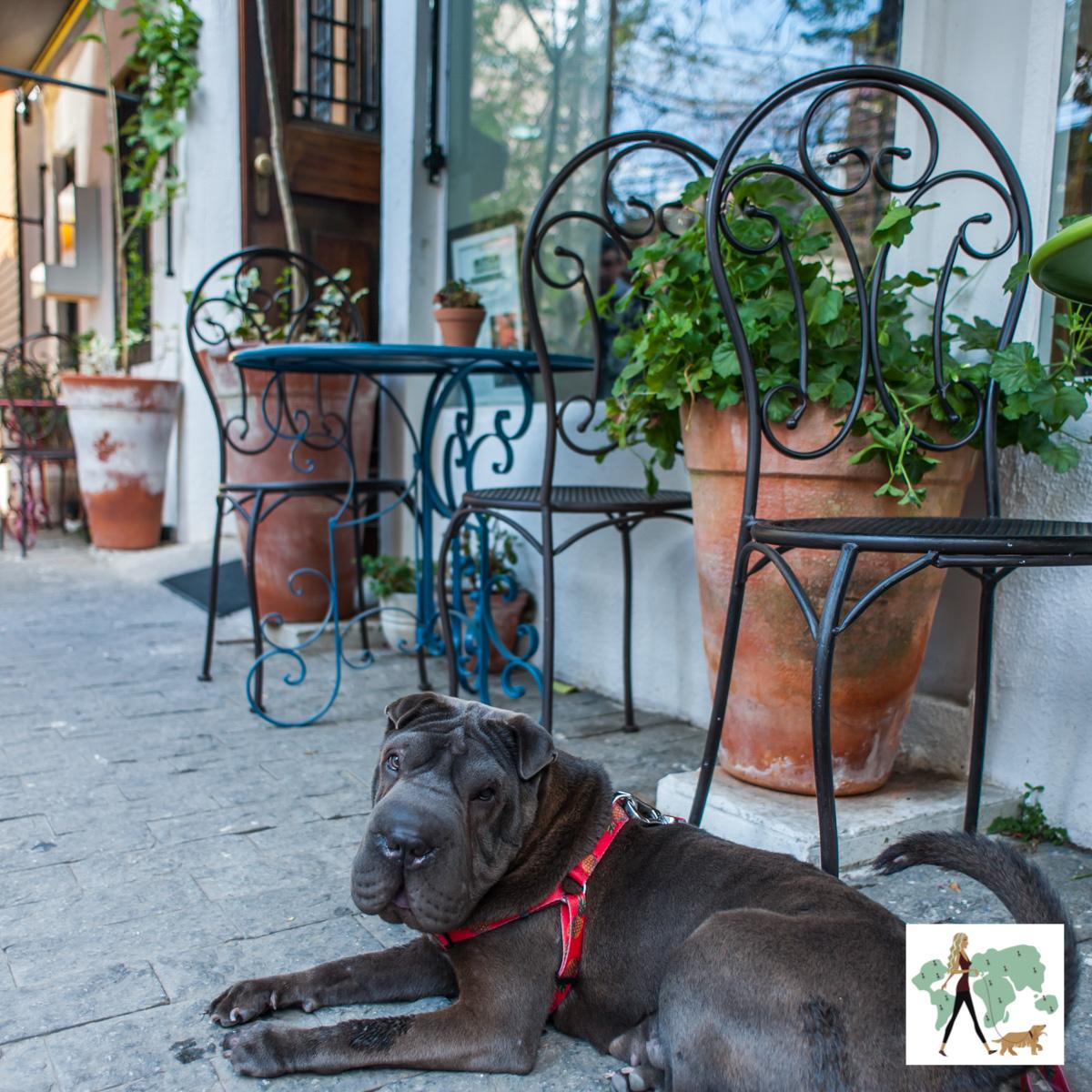 cachorro sentado na calçada ao lado de mesas