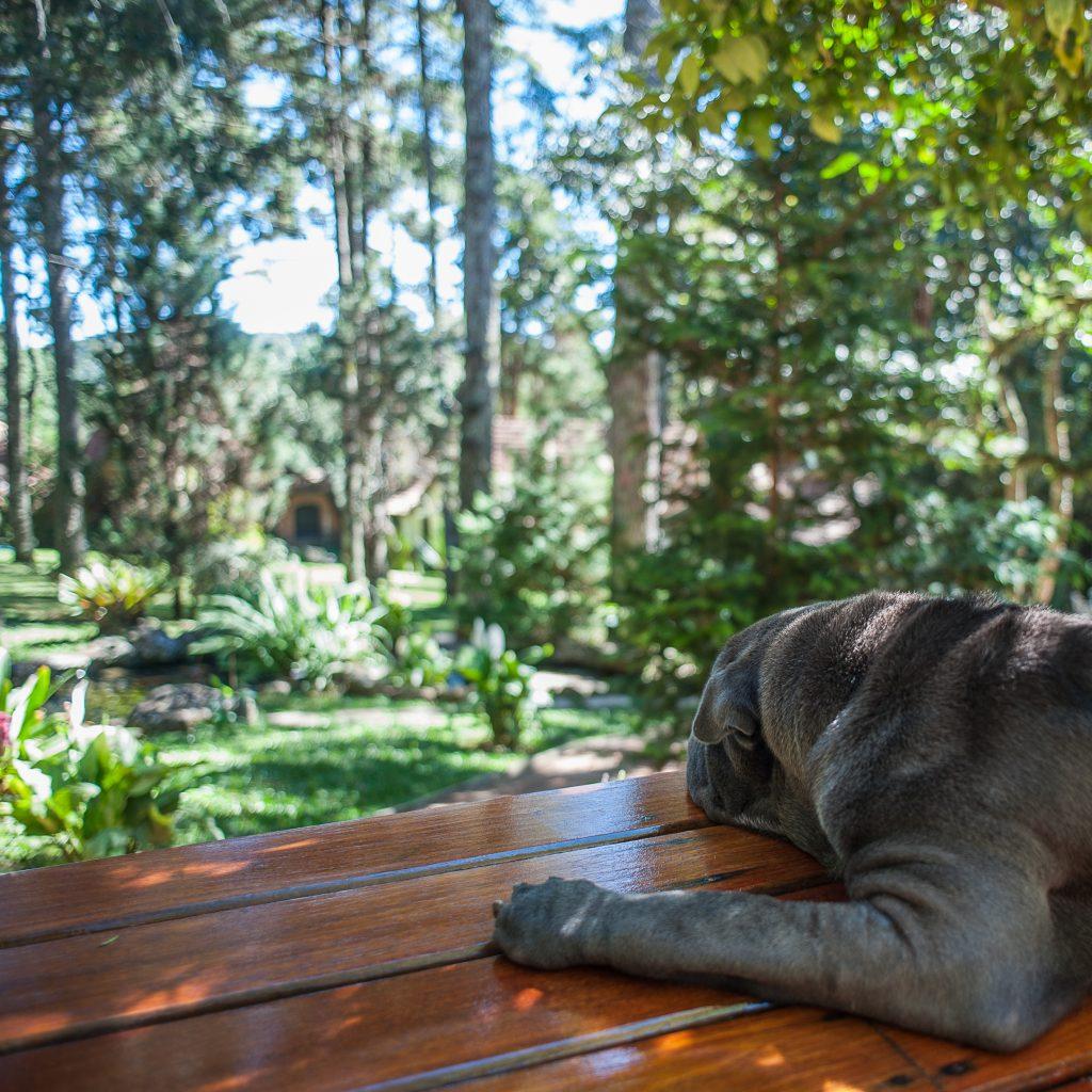 cachorro deitado olhando um bosque