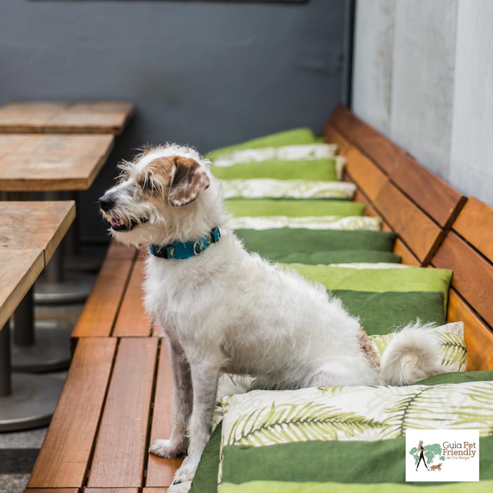 cachorro em cima do sofá do bar Sobe