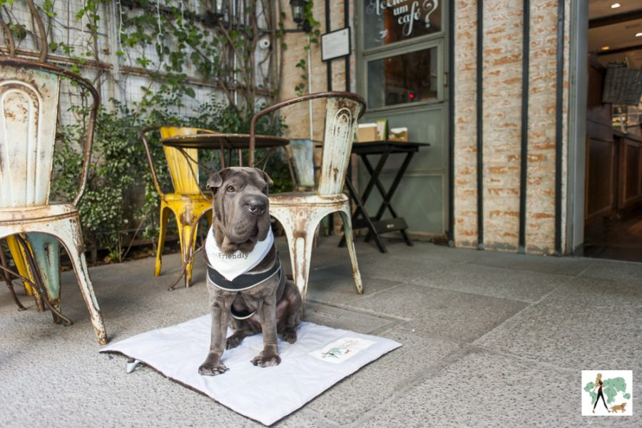 cachorro sentado na frente da padaria