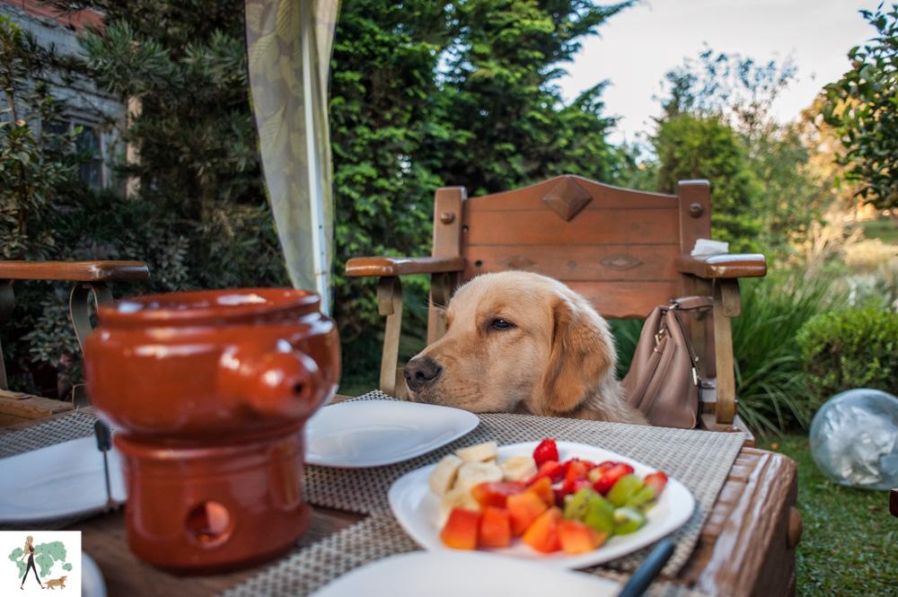 cachorro e mesa com fondue