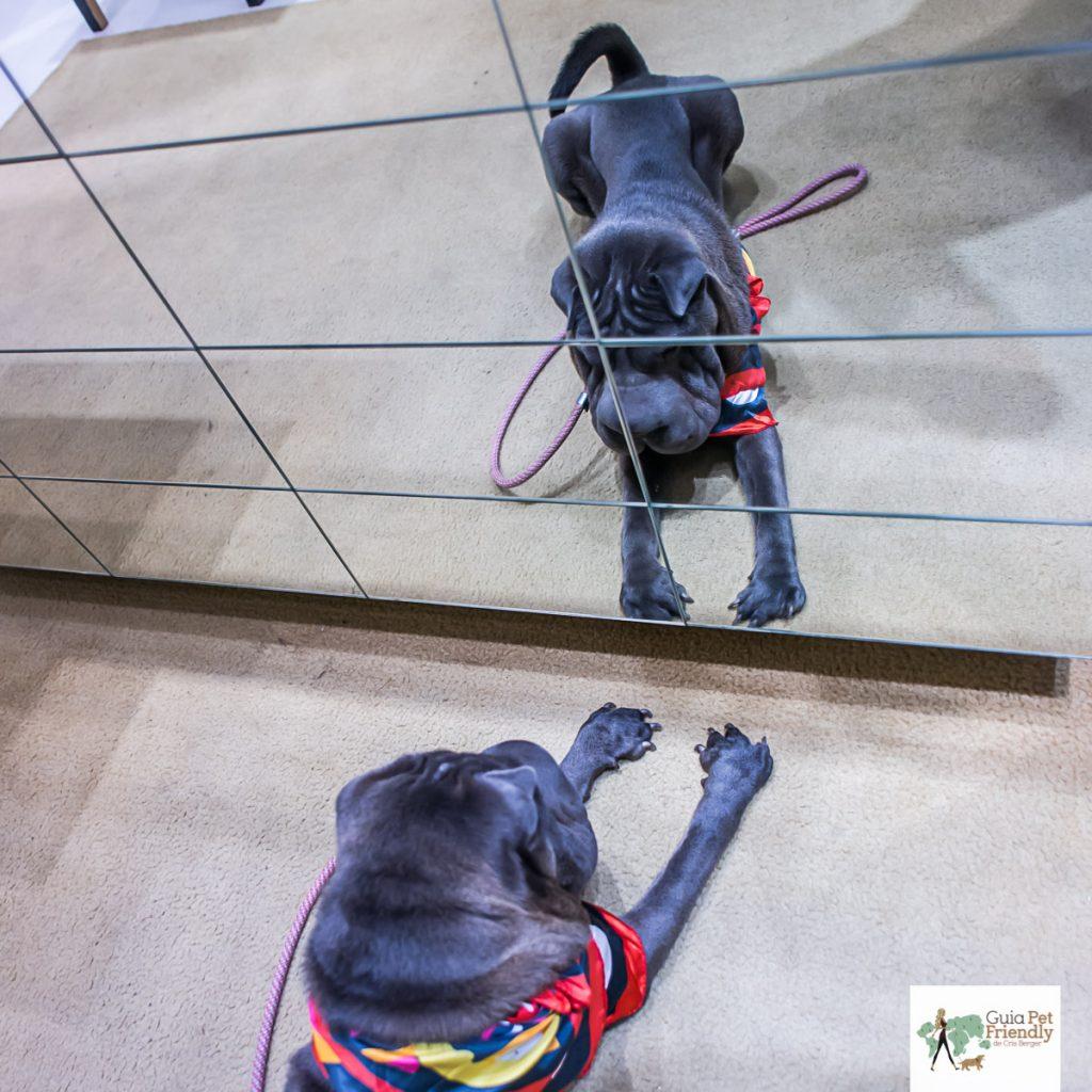 cachorro deitado olhando para o espelho e refletido nele