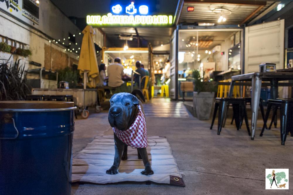 cachorro em hamburgueria