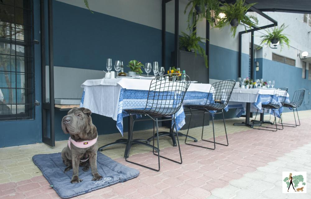 cachorro sentado na calçada de restaurante ao lado de mesas