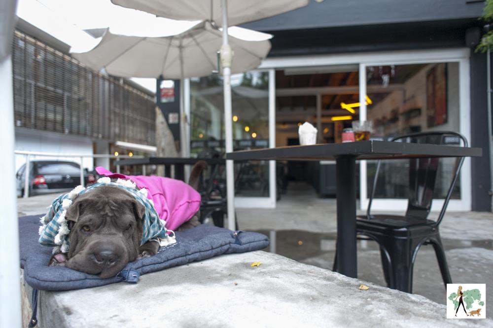 cachorro em cima da mureta de hamburgueria