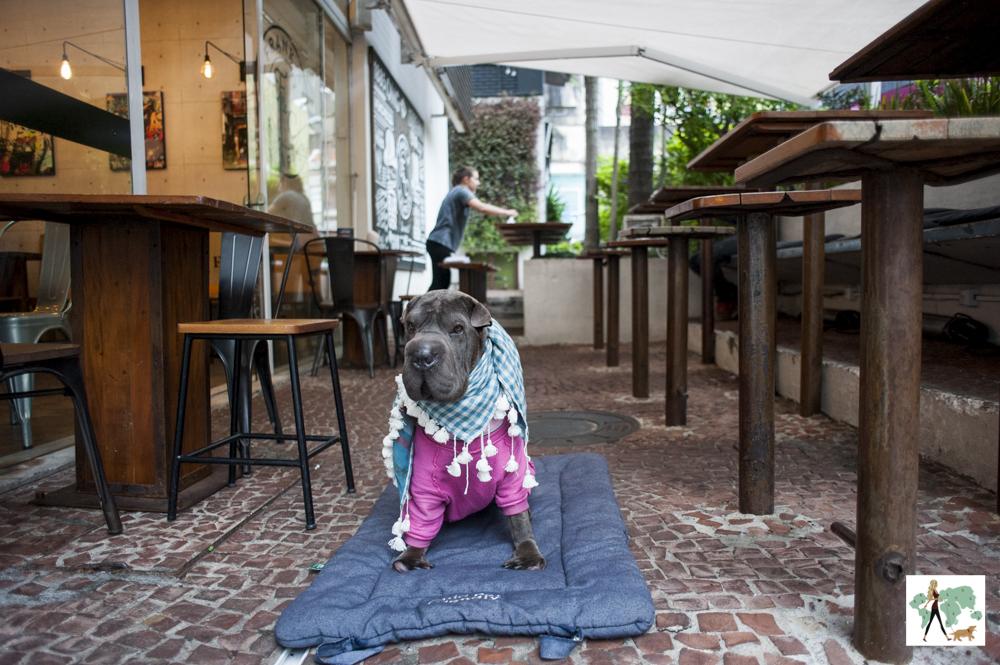 cachorro sentado em cima de almofada em hamburgueria