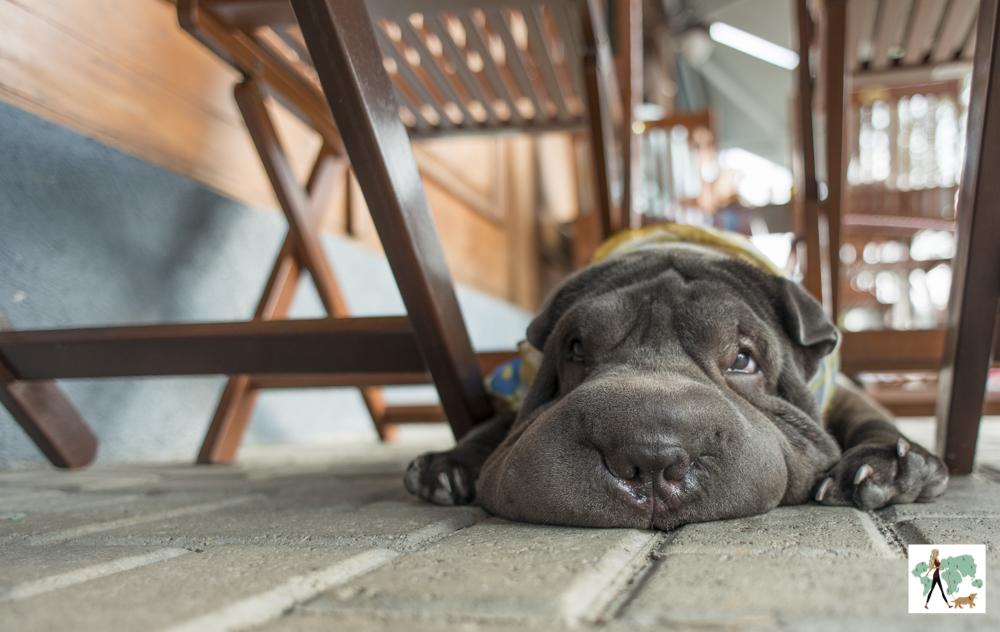 cachorro embaixo de mesa de bar