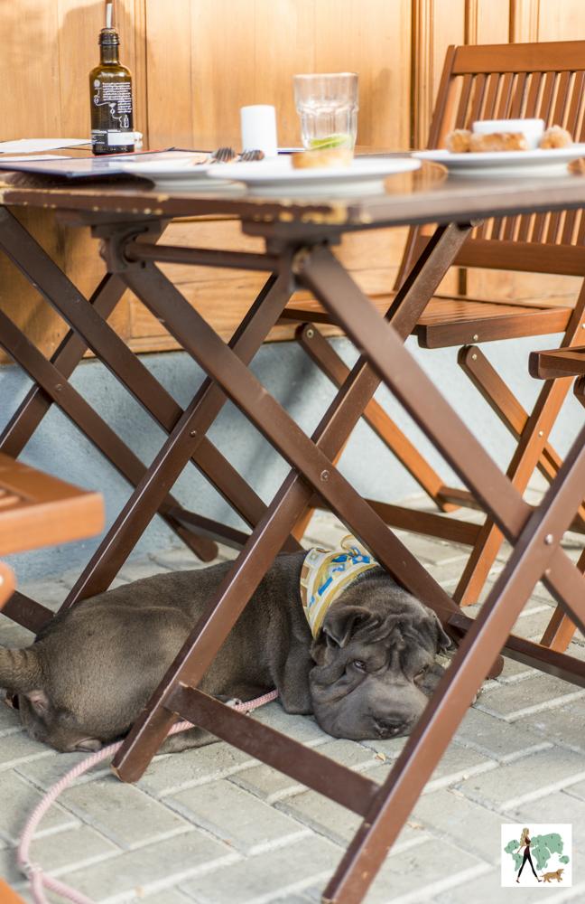 cachorro embaixo da mesa de bar
