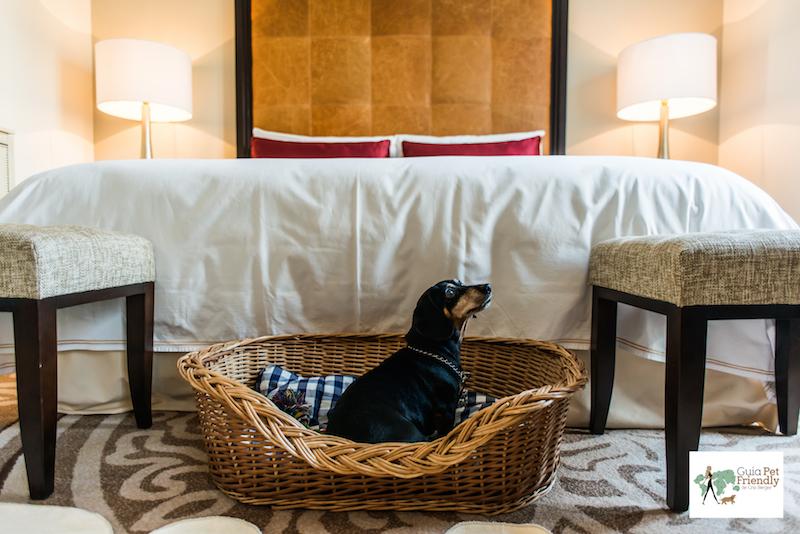 cachorro dentro de caminha de vini em hotel