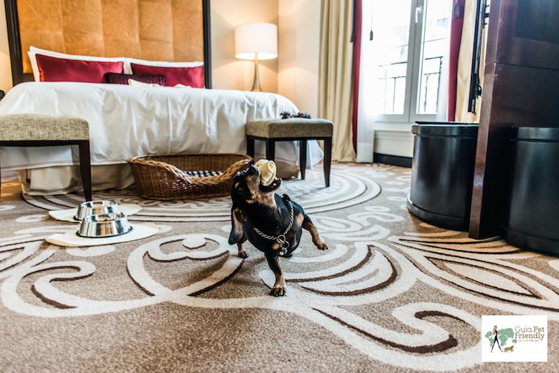 cachorro em quarto de hotel brincando com osso