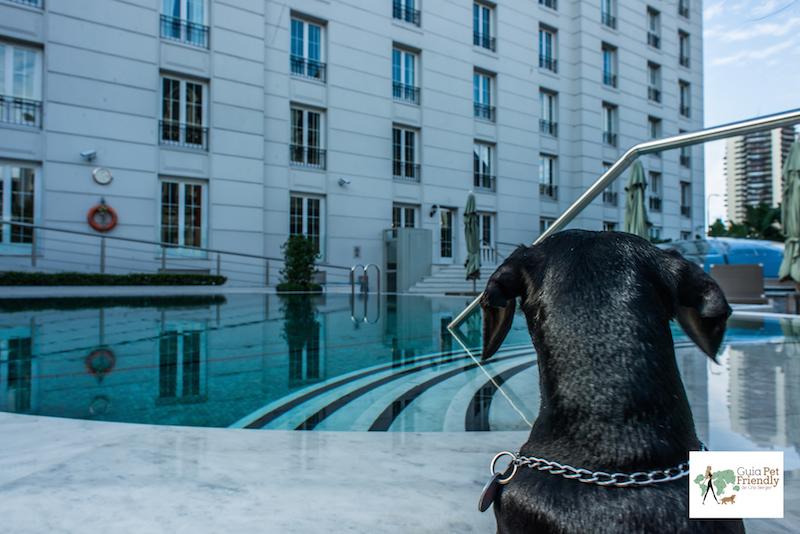 cachorro olhando para piscina de hotel