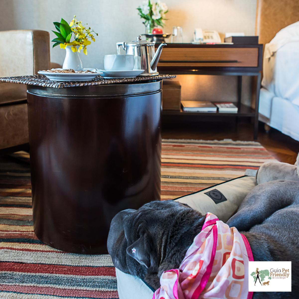 cachorro perto da mesa de chá