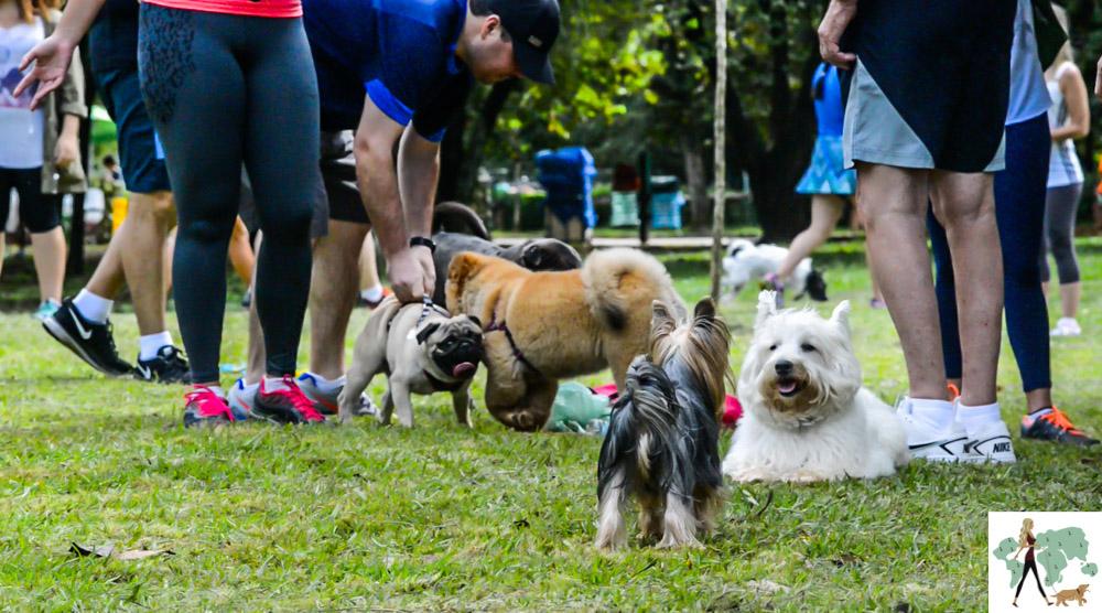 pessoas e cachorros no parque Ibirapuera