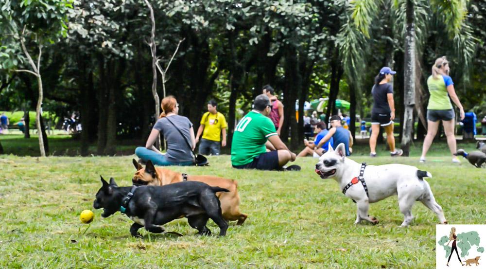 cachorros correndo e brincando no parque