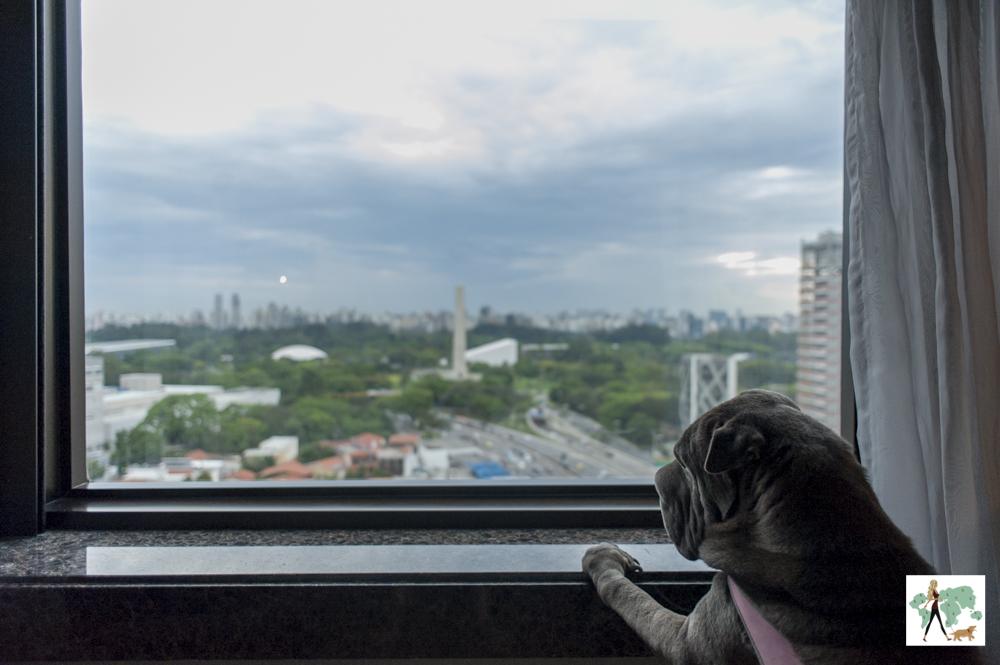 cachorro olhando pela janela de quarto para o Obelisco do Ibirapuera