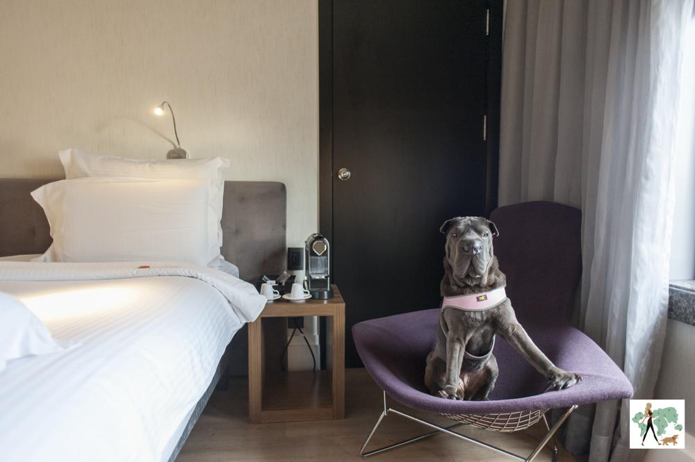 cachorro em cima de cadeira em quarto de hotel
