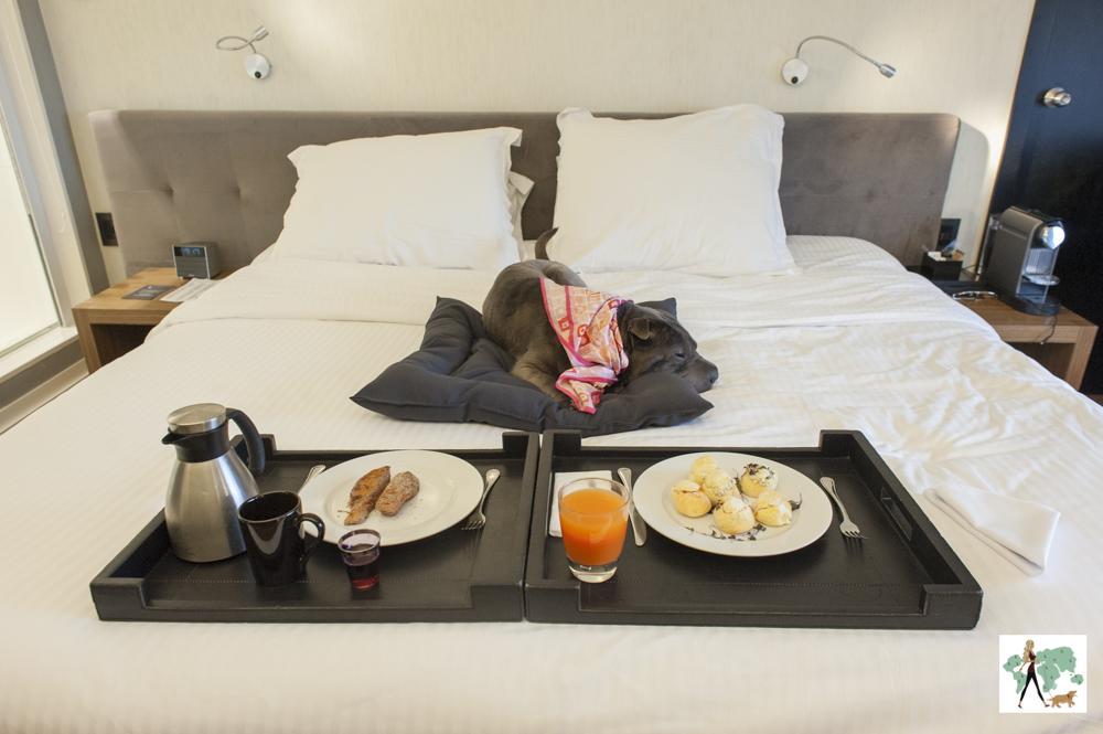 cachorro deitado em cima de cama de hotel com bandeja e pratos de café da manhã
