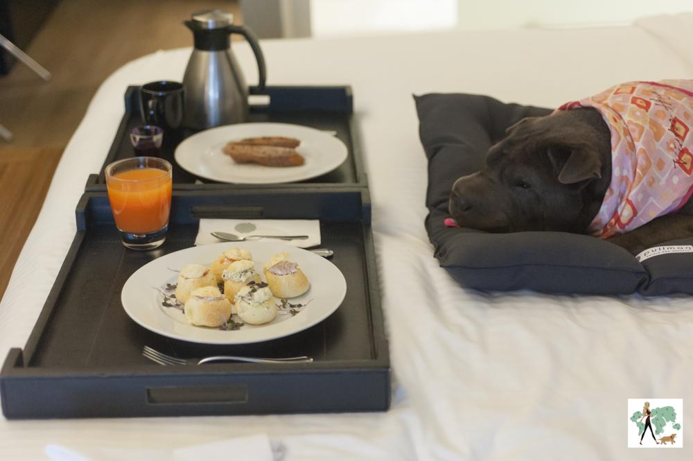 cachorro deitado em cima da cama e bandeja com prato de pães de queijo recheados