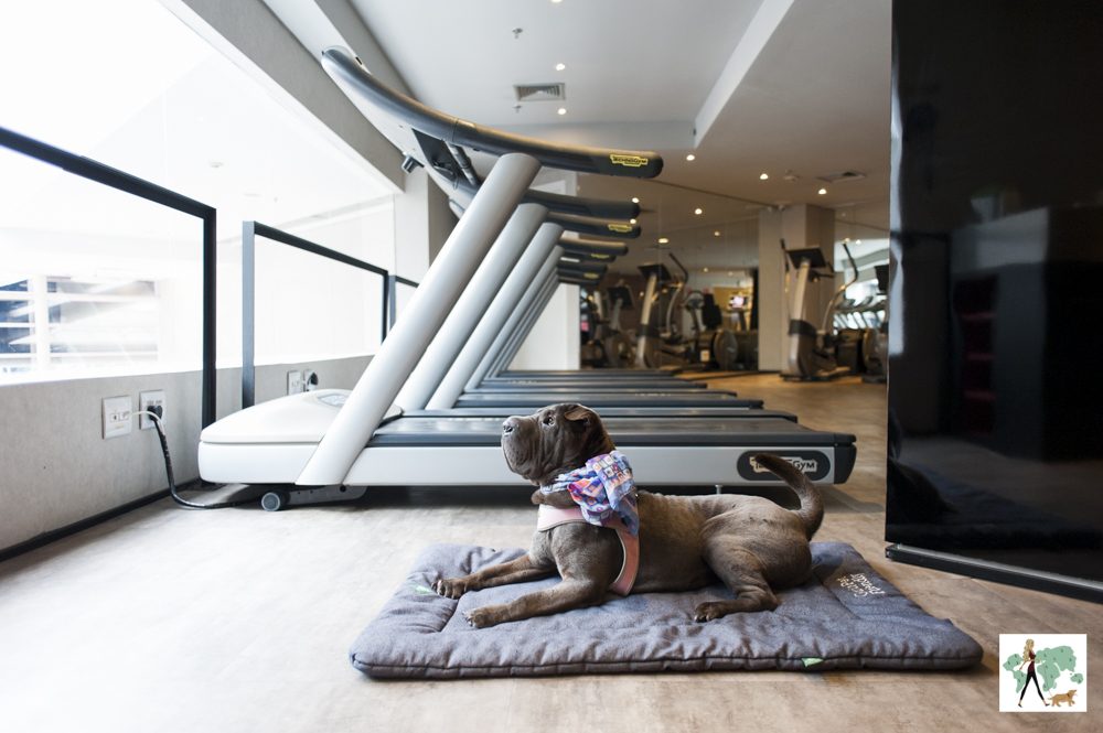 cachorro em cima de almofada em academia de ginástica com esteiras ao lado