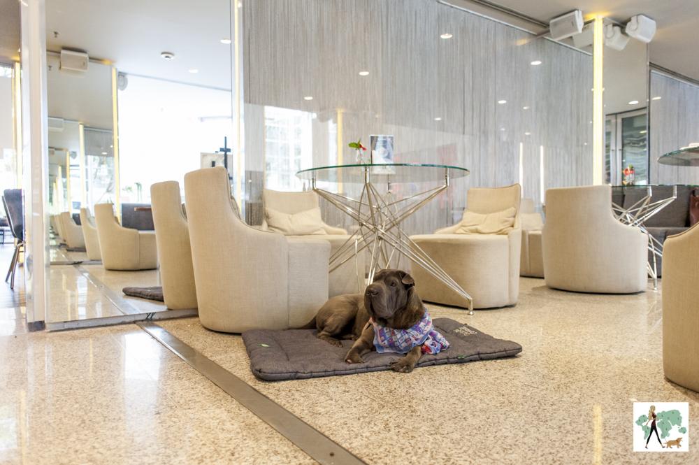 cachorro deitado em cima de almofada e poltronas e mesas em lounge de hotel