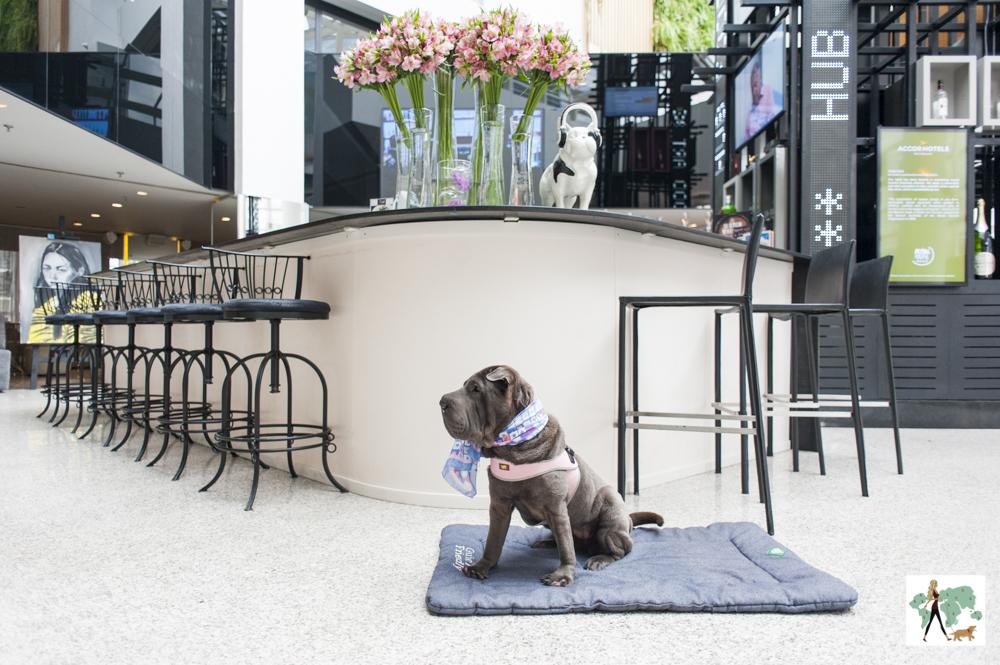 cachorro em cima de colchonete em bar de hotel com bancos altos