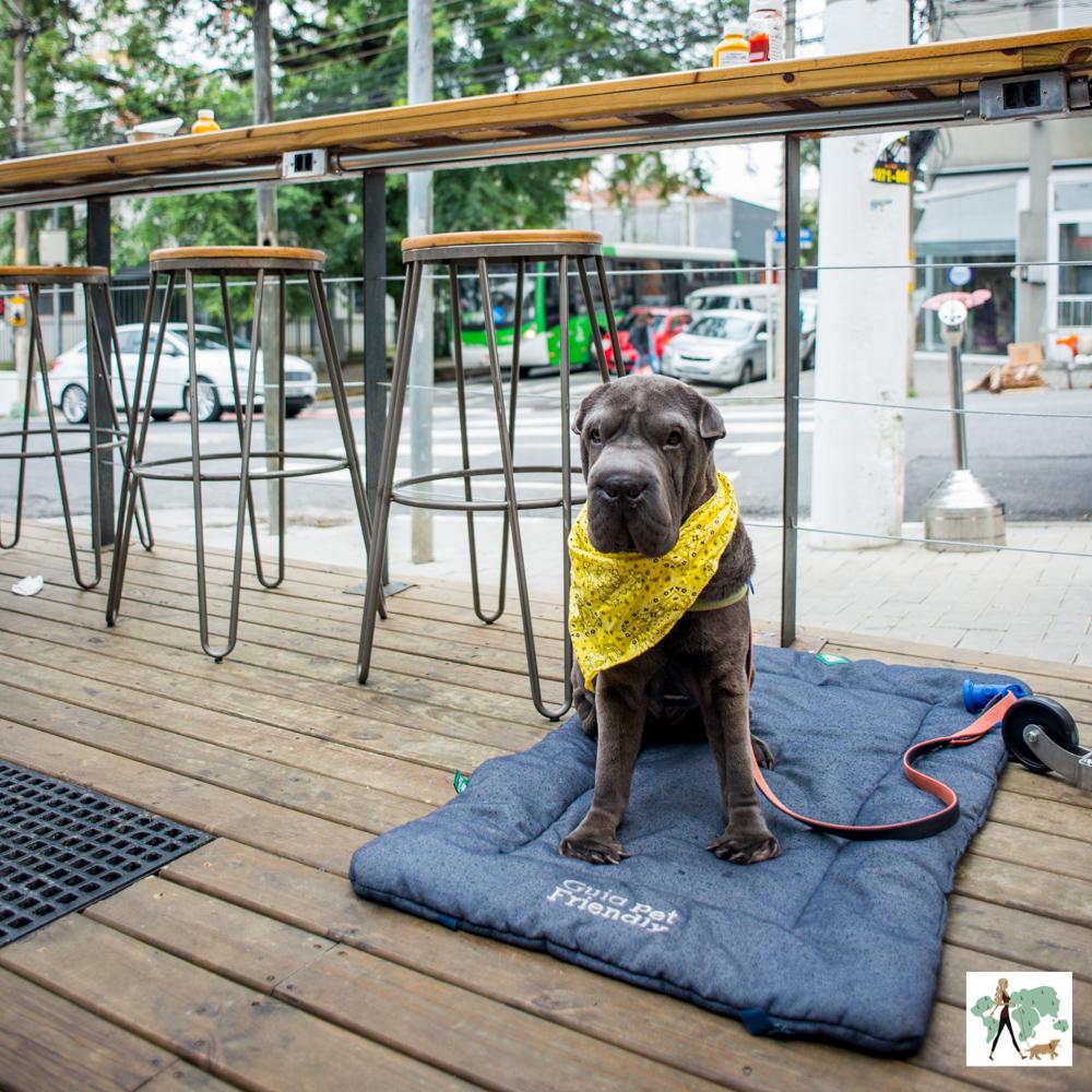 cachorro sentado em colchonete em frente a hamburgueria
