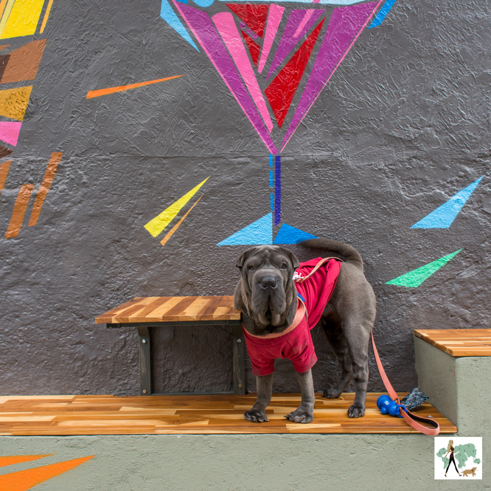 cachorro em pé na area pet de hamburgueria