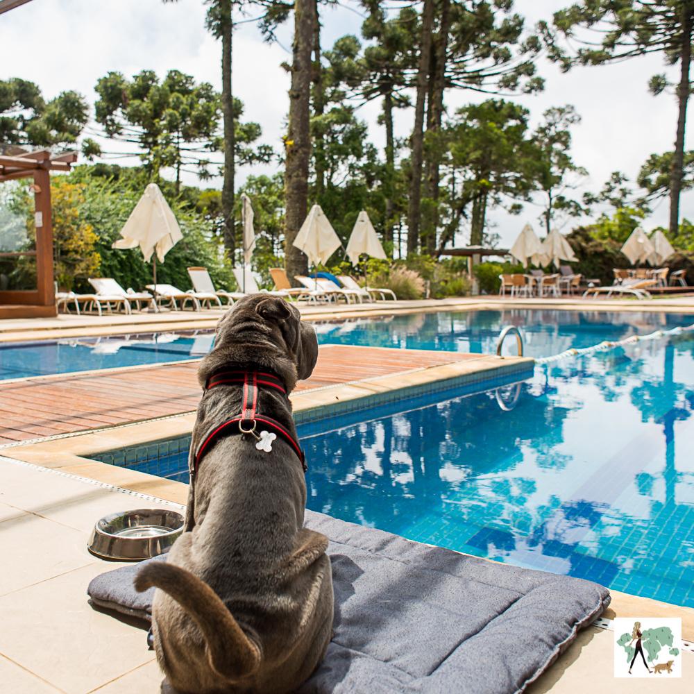 cachorro sentado na frente da piscina