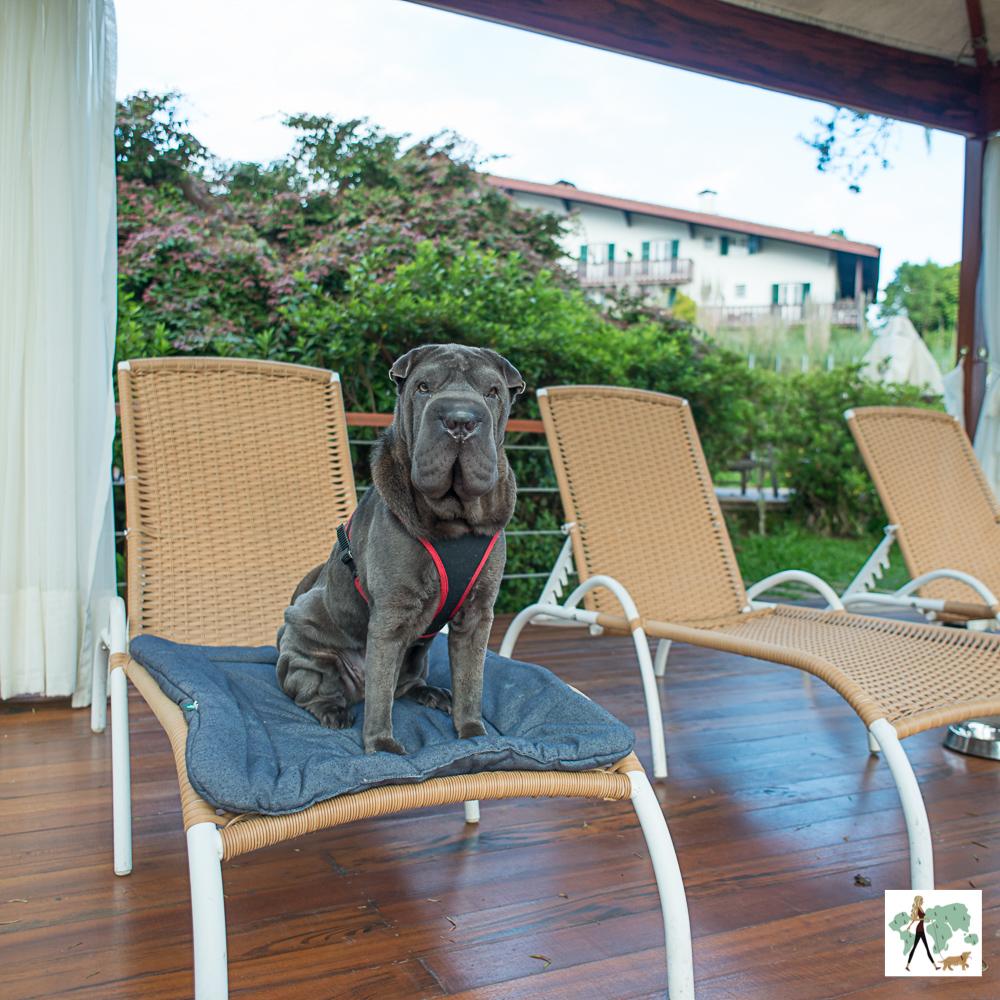 cachorro sentado em cima de espreguiçadeira