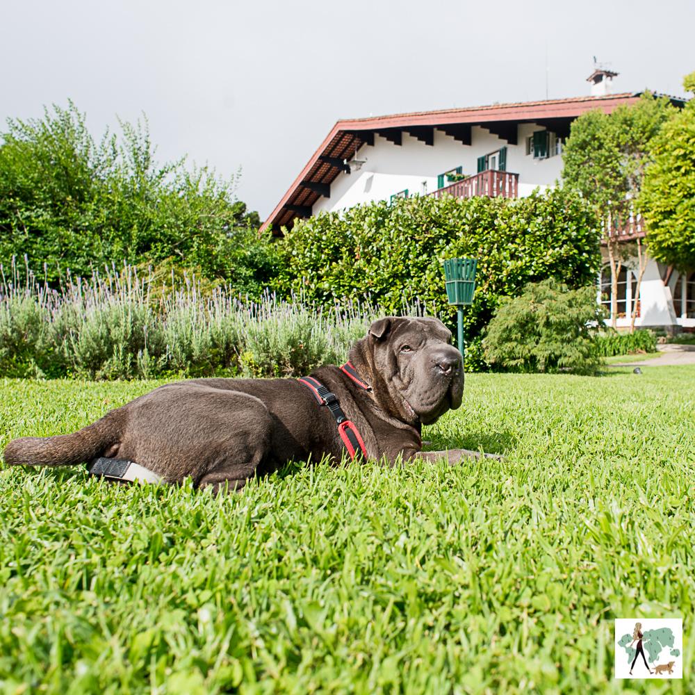 cachorro deitado em gramado