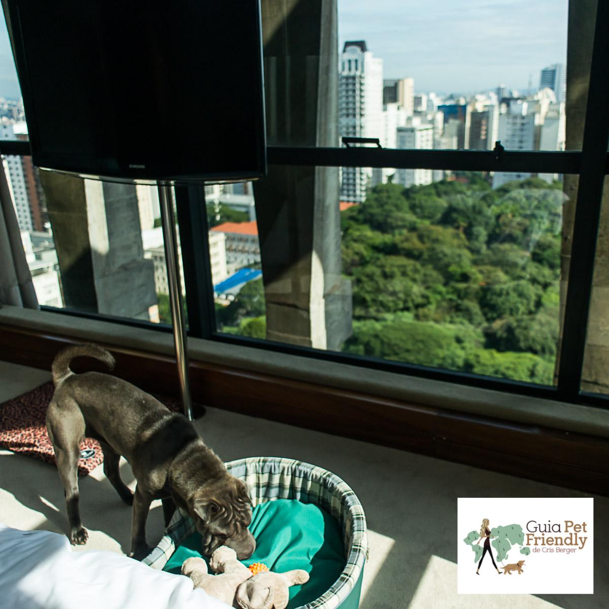 cachorro em quarto de hotel com vista para copa das árvores