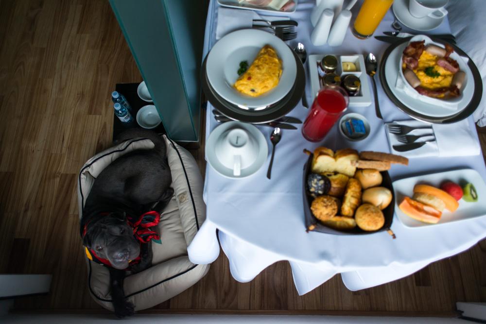 cachorro deitado em caminha e mesa com pratos de café da manhã