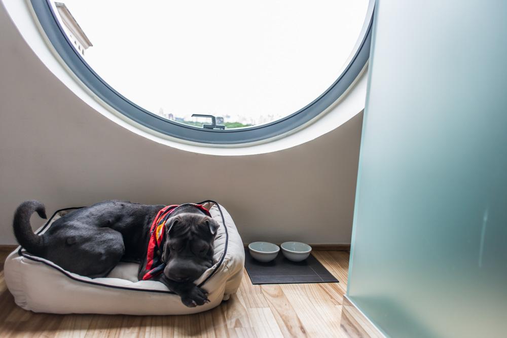 cachorro deitado em caminha em quarto de hotel