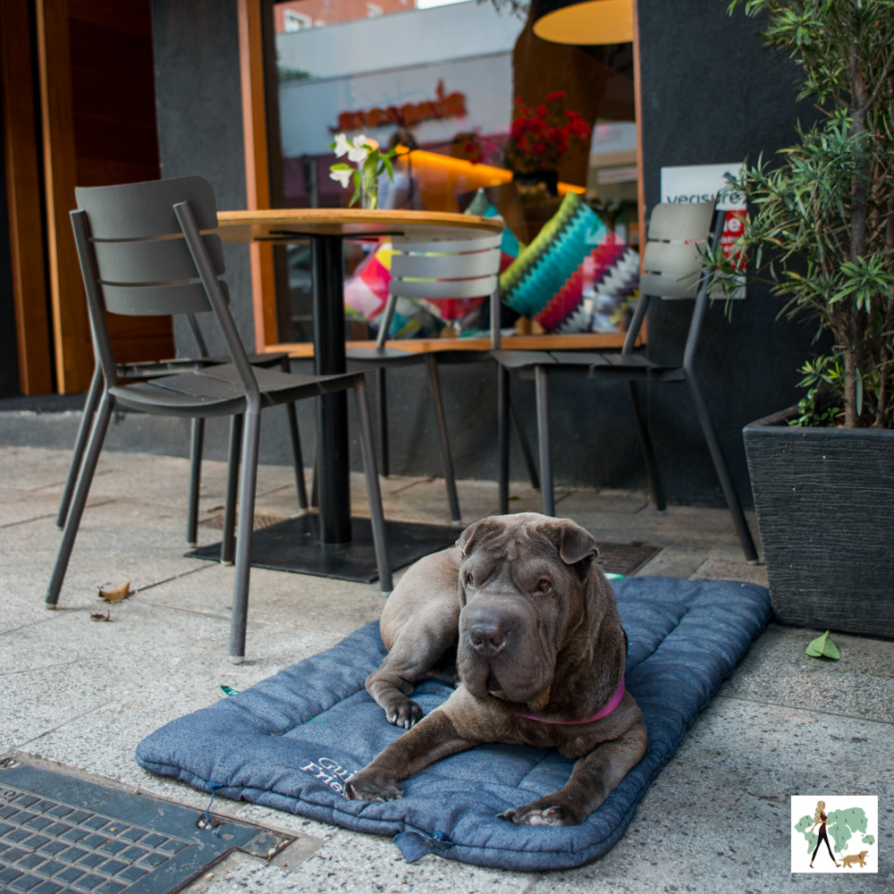 Três lugares pet friendly nos Jardins