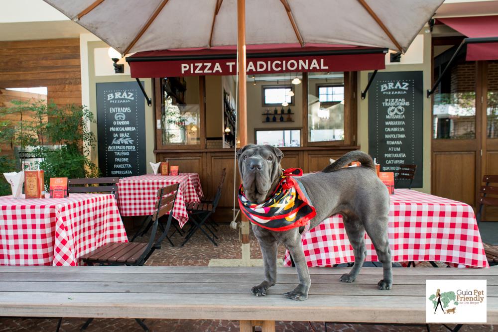 cachorro em cima do banco de pizzaria