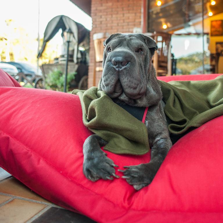 cachorro deitado em almofada