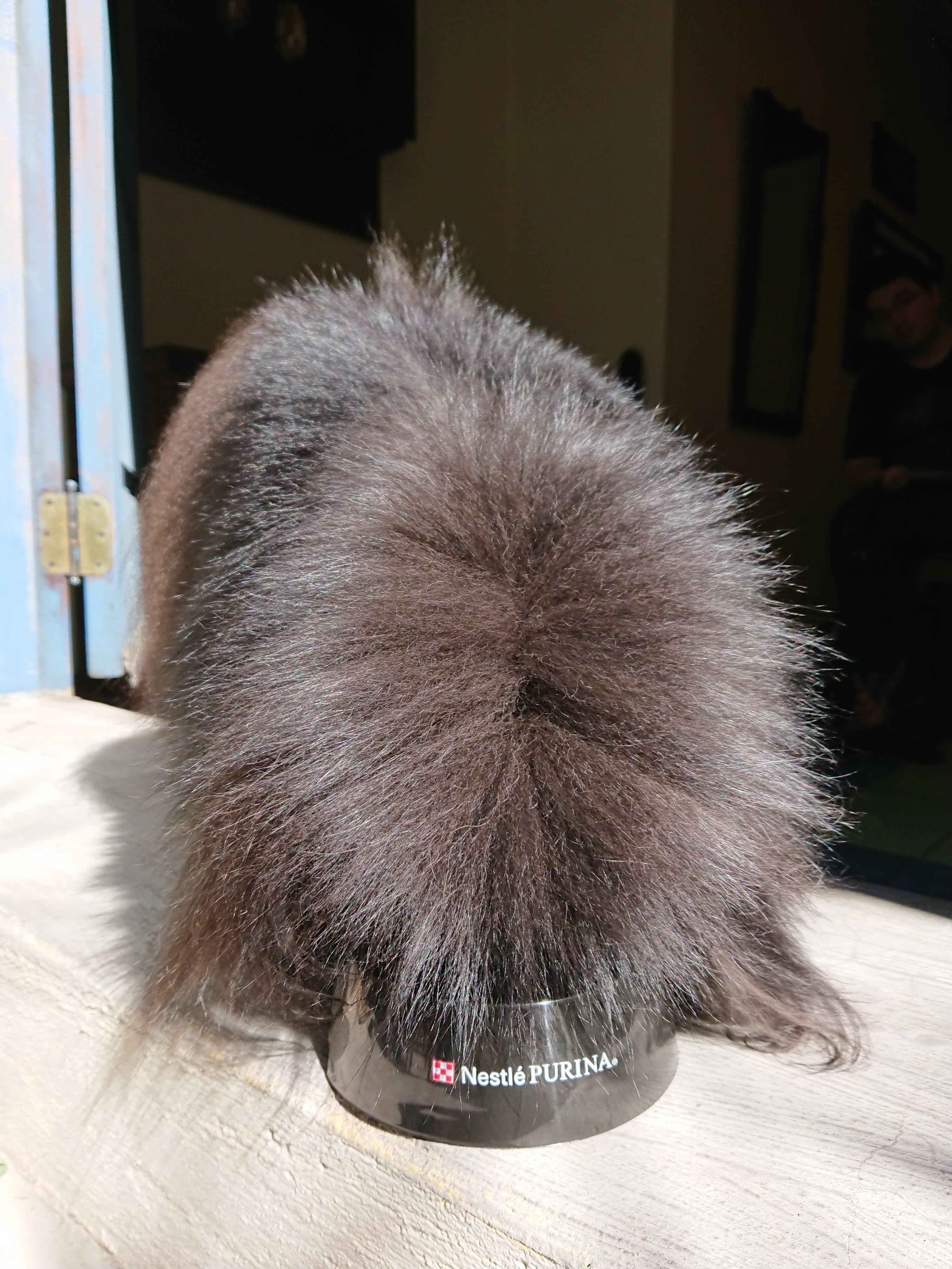 cachorro peludo no comedouro