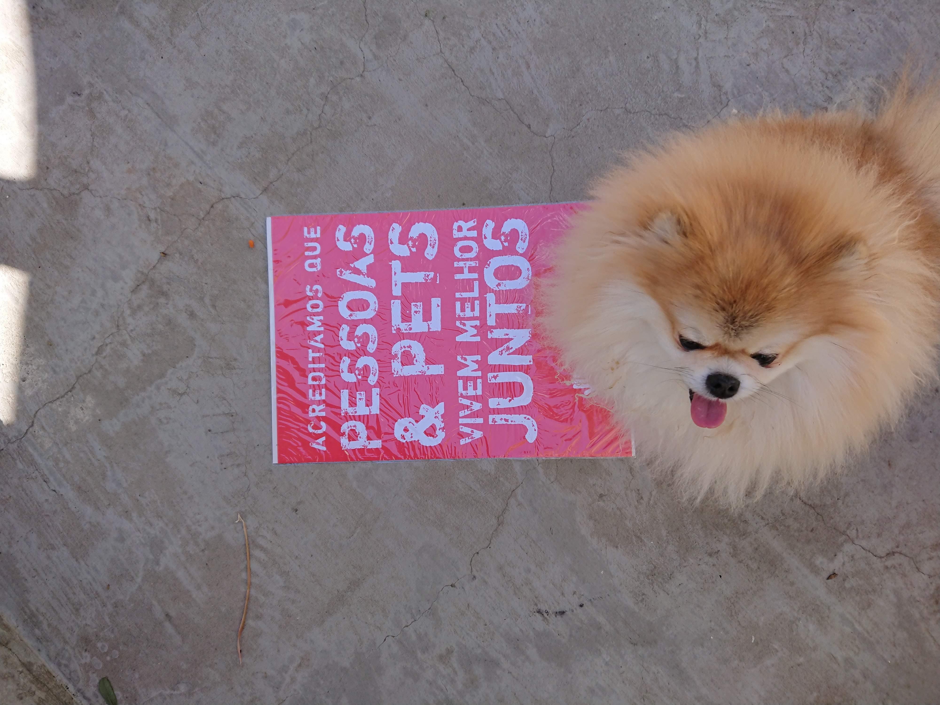 cachorro e o lambe lambe