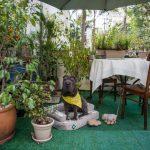 cachorro sentado no jardim