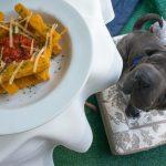 cachorro olhando a comida