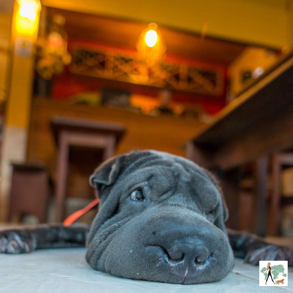 cachorro deitado no chão de pizzaria