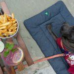 cachorro e mesa com comida