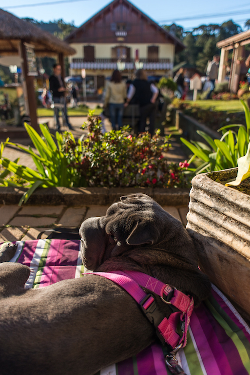 cachorro em Monte Verde